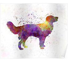 Drentsche Partridge Dog in watercolor Poster