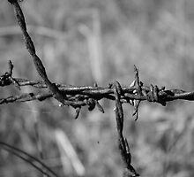 Rusty2 by traceyann33