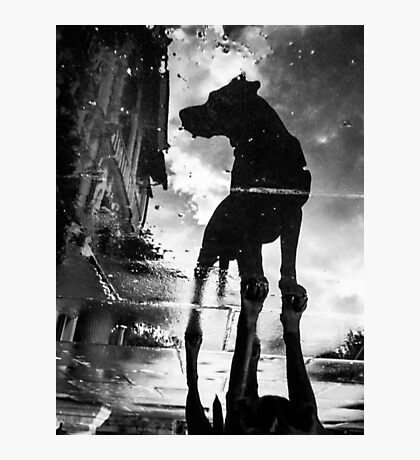 My #dog filby reflected in a puddle today taken on my #galaxynexus Photographic Print