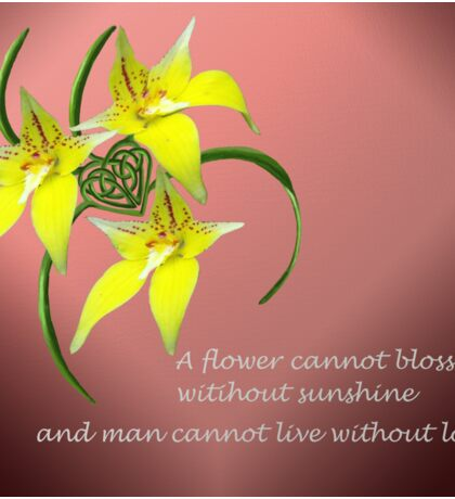 Cowslip Orchid Love Quote Celtic Knotwork Heart Sticker