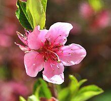 Tree pink flower by MariaNikelova