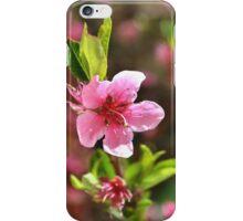 Tree pink flower iPhone Case/Skin