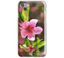 Tree pink flower iPhone Case/Skin