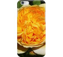 English David Austin Rose Teasing Georgia iPhone Case/Skin
