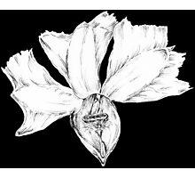 Fan flower 2 Photographic Print