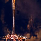 Octopus in ladle by alan shapiro