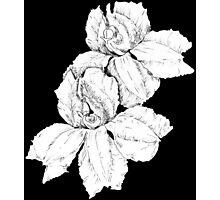 Fan flower 3 Photographic Print