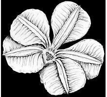 Fan flower 4 Photographic Print