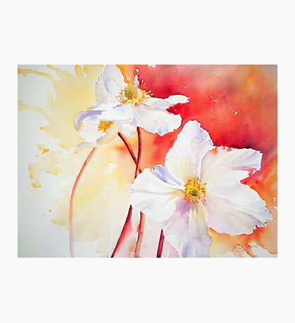 White Windflowers Photographic Print