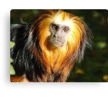 Amazon Rainforest Wildlife Photography  Canvas Print