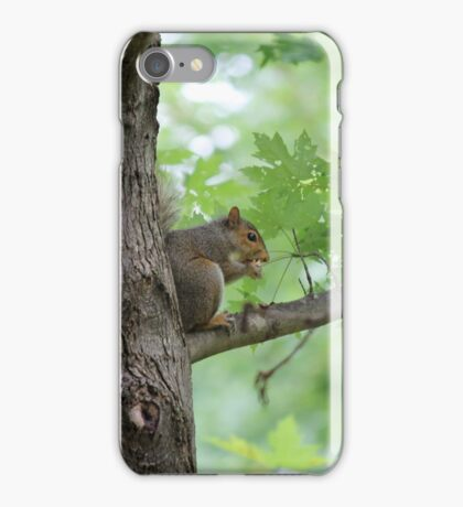 squirrel on the tree iPhone Case/Skin