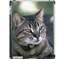 "Chat - Cat  "" Zazou ""  2   (c)(t) by Olao-Olavia / Okaio Créations 300mm  f.2.8 canon eos 5  1994 iPad Case/Skin"
