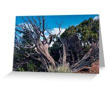 Utah Juniper Tree at Dinosaur National Monument Colorado Greeting Card