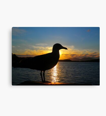 Sunset Seagull  Canvas Print
