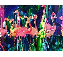 Flamingo Dance Photographic Print