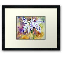 Pond Iris Framed Print