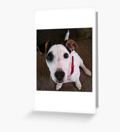 My dog Buster Greeting Card