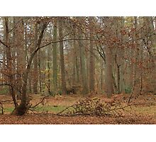 Autumn at Thetford Photographic Print