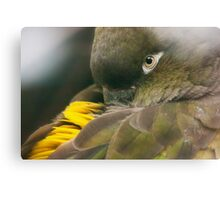 Burrowing Parrot Canvas Print