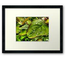Green Raindrops Framed Print