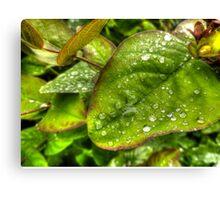 Green Raindrops Canvas Print