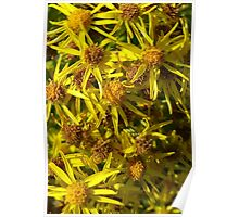 Yellow Floral Bloom Poster