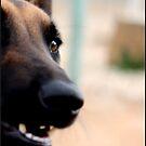 Dog Eye by dedakota