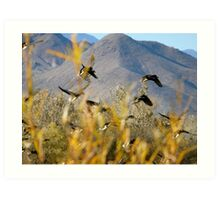 Bosque del Apache Ducks in Flight Art Print