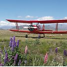 Biplanes & Lupins by Larry Lingard-Davis