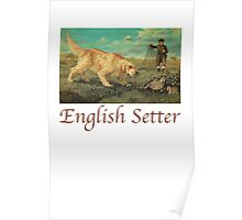 Dog Breed - the English Setter Poster