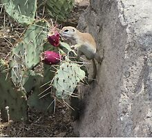 Round-tailed Ground Squirrel Between a Rock and a Prickly Place by Ingasi