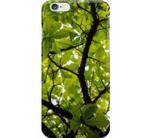 Swamp White Oak Tree iPhone Case/Skin