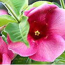 Pink Bloom by June Holbrook
