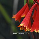 Tasmanian Christmas Bells by Kate Hibbert
