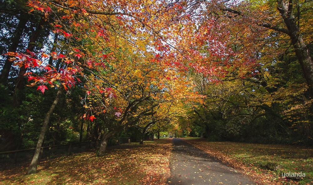 Autumn Lane, Mt Wilson by yolanda