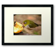 """An Apple A Day"" - Walpole Western Australia Framed Print"
