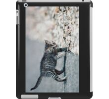 "Chat - Cat  "" Zazou ""  5  (  (c)(t) by Olao-Olavia / Okaio Créations 300mm  f.2.8 canon eos 5  1989 iPad Case/Skin"