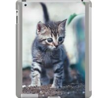 "Chat - Cat  "" Zazou "" 6 (c)(t) ) by Olao-Olavia / Okaio Créations 300mm  f.2.8 canon eos 5  1989 iPad Case/Skin"