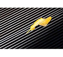 Leaf Lightning Photographic Print