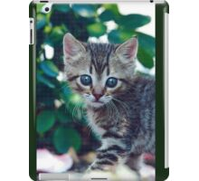 "Chat - Cat  "" Zazou "" 7 (c)(t) ) by Olao-Olavia / Okaio Créations 300mm  f.2.8 canon eos 5  1989 iPad Case/Skin"