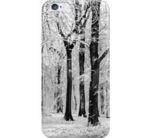 Snowy Beech Trees iPhone Case/Skin