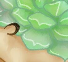 echeveria hedgehog Sticker