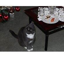 Smokey waiting for Santa Photographic Print