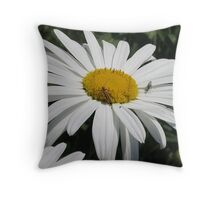 Close Up Common Daisy with Winged Insects Throw Pillow