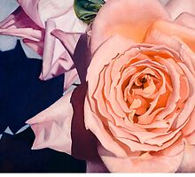Rose Splendour by Kerryn Madsen-Pietsch