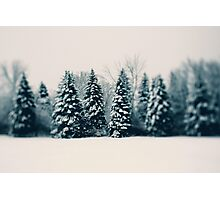 Winter and Woods Photographic Print
