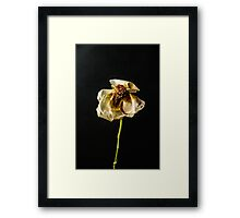 Decayed Flower Framed Print