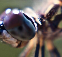 Macro shot of a dragonfly Sticker