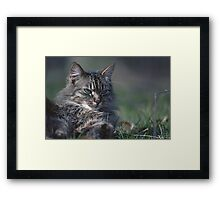 """Chat - Cat  """" Tchink boom"""" 01 (c)(t) ) by Olao-Olavia / Okaio Créations 300mm  f.2.8 canon eos 5  1989 Framed Print"""
