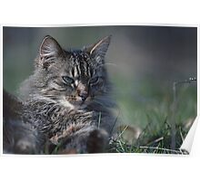 "Chat - Cat  "" Tchink boom"" 01 (c)(t) ) by Olao-Olavia / Okaio Créations 300mm  f.2.8 canon eos 5  1989 Poster"